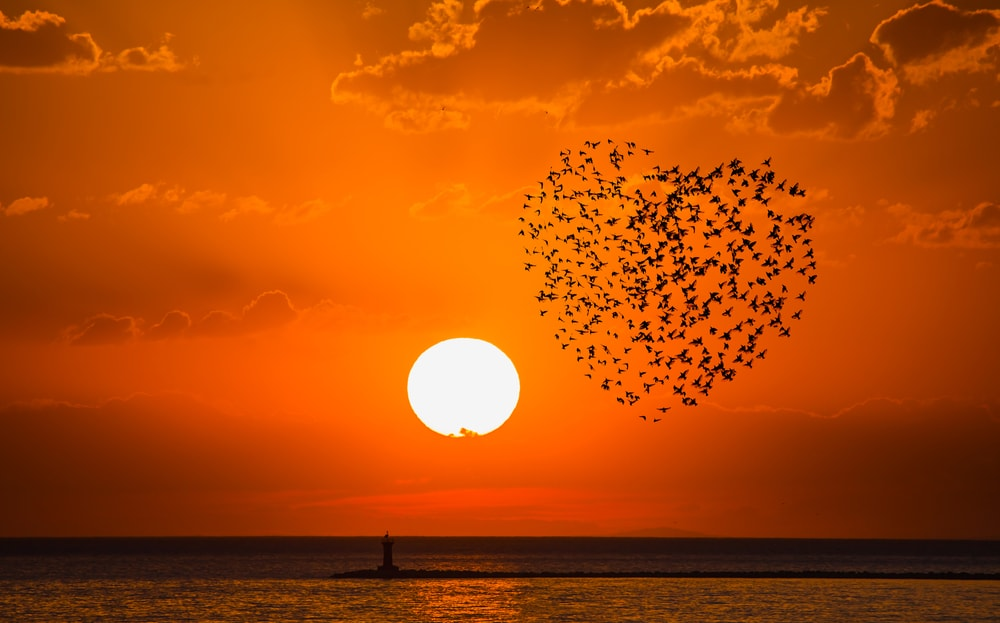 flock-of-birds-in-heart-shape-with-sun